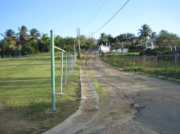 dirt road surrounded by greenery in Vieques Puerto Rico