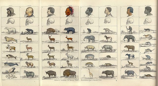 "From Types of Mankind (1854) by J.C. Nott, and Geo. R. Gliddon. In arguing for the superiority of whites, scientists claimed that the world's ""races"" had different ""origins"" and were therefore different ""species"". Photo by APS Museum. CC BY-NC 2.0"